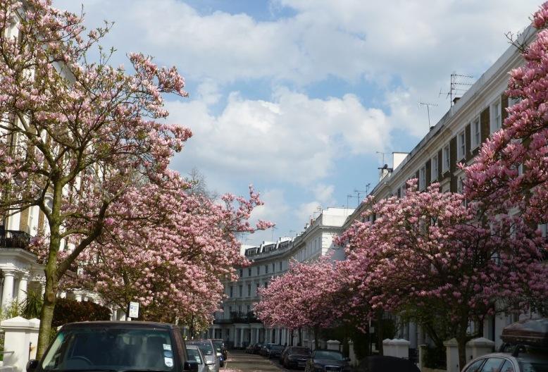 magnolia-street-image2